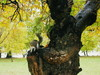 a_squirrel
