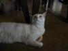 my_cat_1