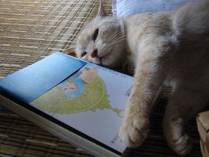 My_cat_2